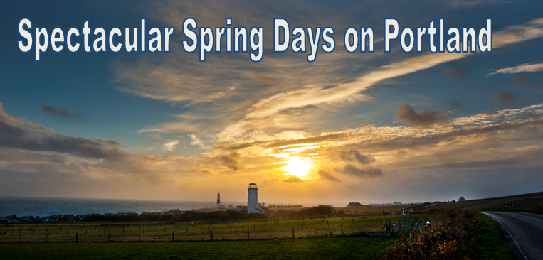 spring on portland
